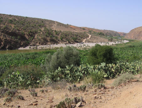 Anti Atlas vegetation