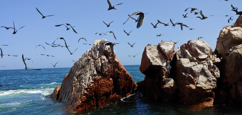Birds at the Ballestas Islands
