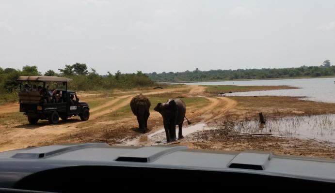 Elephants Udawalawe Park