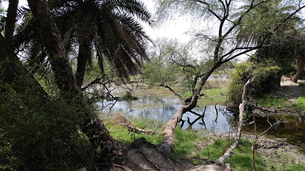 Keoladeo Park