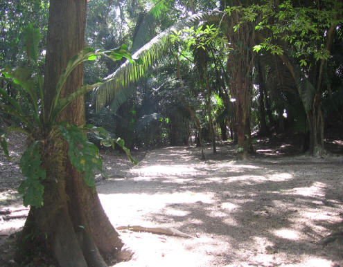 Lamanai Temples Path