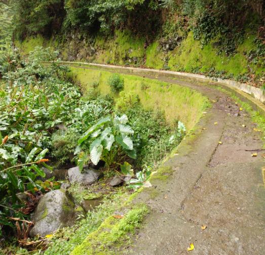 Madeira Levada Walk