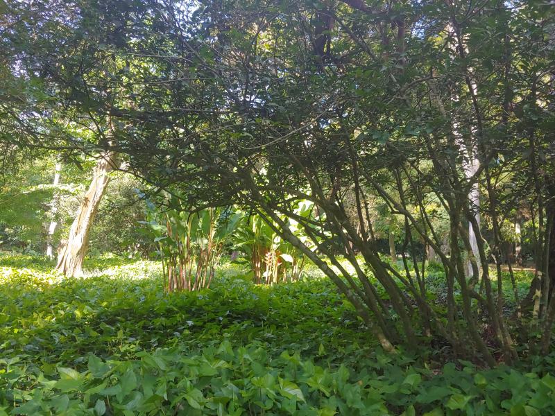 Peaceful Jardim Botanica